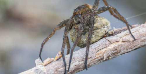 гнёзда пауков